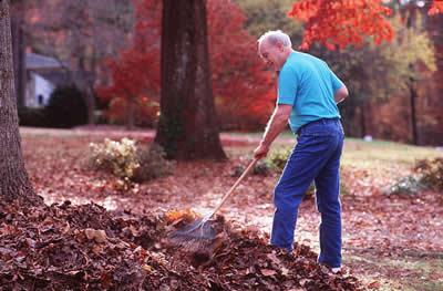 Man Raking Fall Leaves